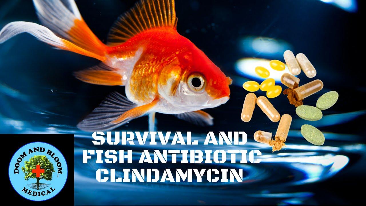 Antibiotic clindamycin youtube for Fish antibiotics doxycycline