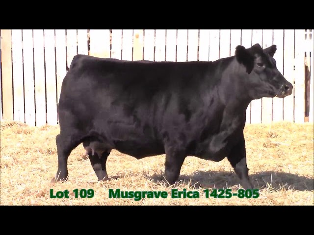 Musgrave Angus Lot 109