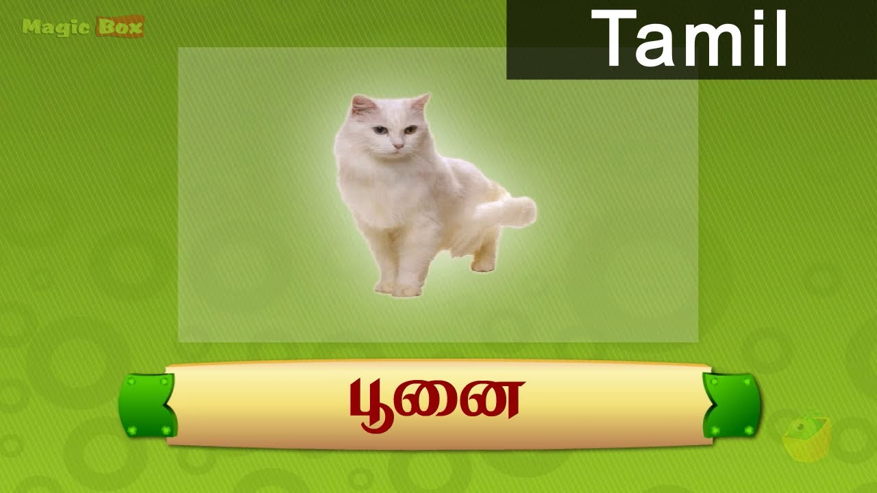 cat animals in tamil pre school animated educational videos cat animals in tamil pre school animated educational videos for kids
