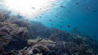 Diving Bunaken 2013 Thumbnail
