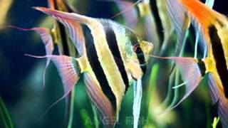 Common Types Of Freshwater Aquarium Fish
