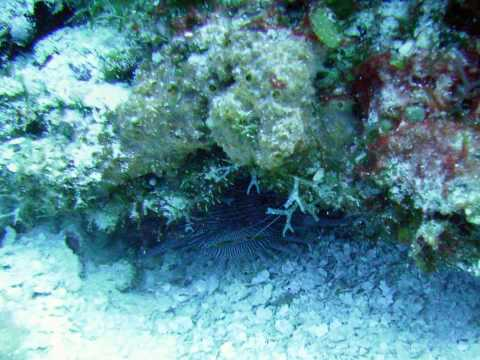 Cozumel Diving - 2009 - Stills
