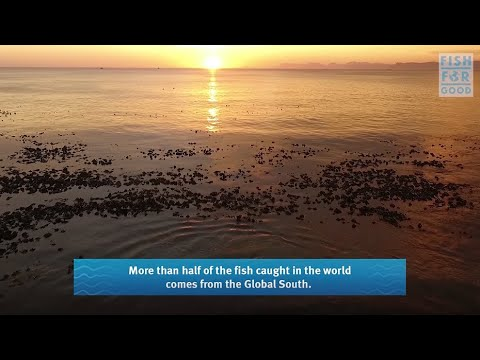 Fish For Good Project   South Africa   Marine Stewardship Council