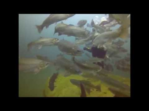 Gilboa Quarry Scuba Diving July 2014