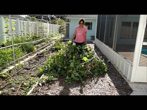 See what removed from vegetable garden after hurricane