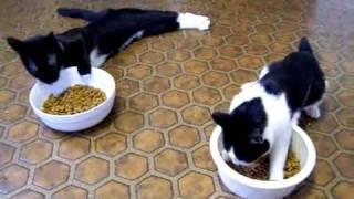 пьяные коты