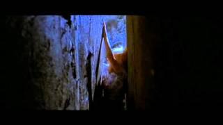 Four Flies on Grey Velvet (1971) - Best Scene