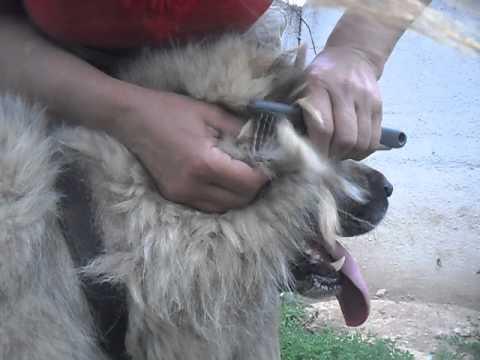 Колтунорез для кошек как пользоваться видео