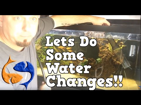 Aquarium Water Change Tricks and Tips LIVE!! KGTropicals