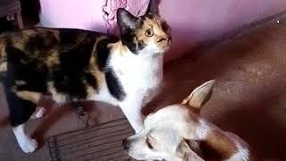 ufc de gatos ( 2 parte )