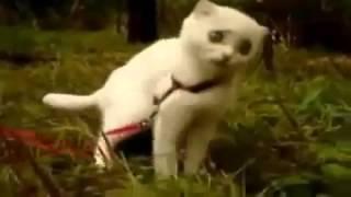 Кот с дьявольскими глазами  Ржач!!!