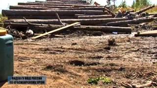 Вырубили лес на 246 миллионов рублей(, 2013-06-04T09:19:25.000Z)