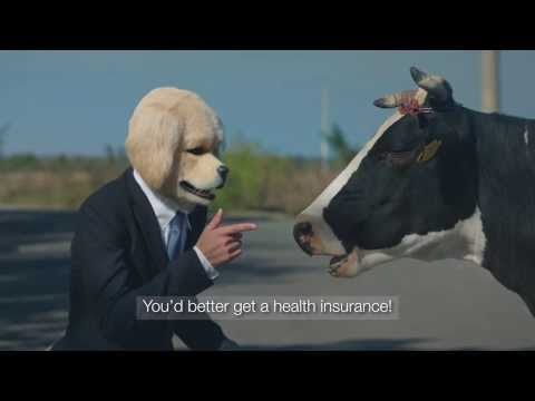 GPI-Vienna Insurance. Cow