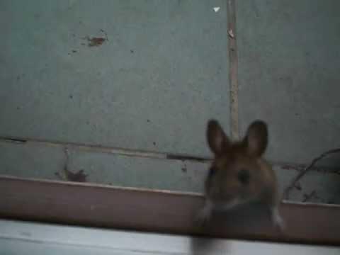 Eine Maus Will In Die Wohnung Mov Youtube