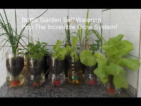 Bottle Garden Self Watering Pop The Incredible Grow System!