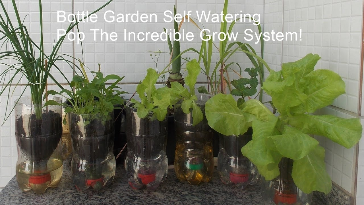 Garden Watering System >> Bottle Garden Self Watering Pop The Incredible Grow System! - YouTube