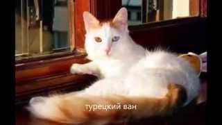 Породы домашних кошек. Самые разные редкие породы кошек