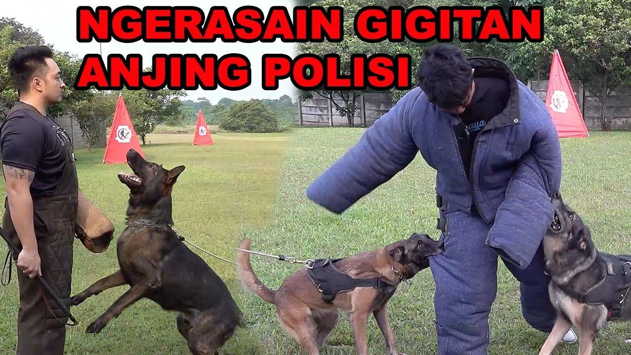 Ngerasain Gigitan Anjing Polisi Youtube