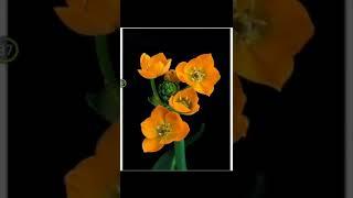 انواع گل ها با ذکر صلوات