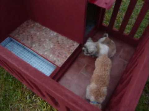 new luxury dog house with small luxury pool - youtube