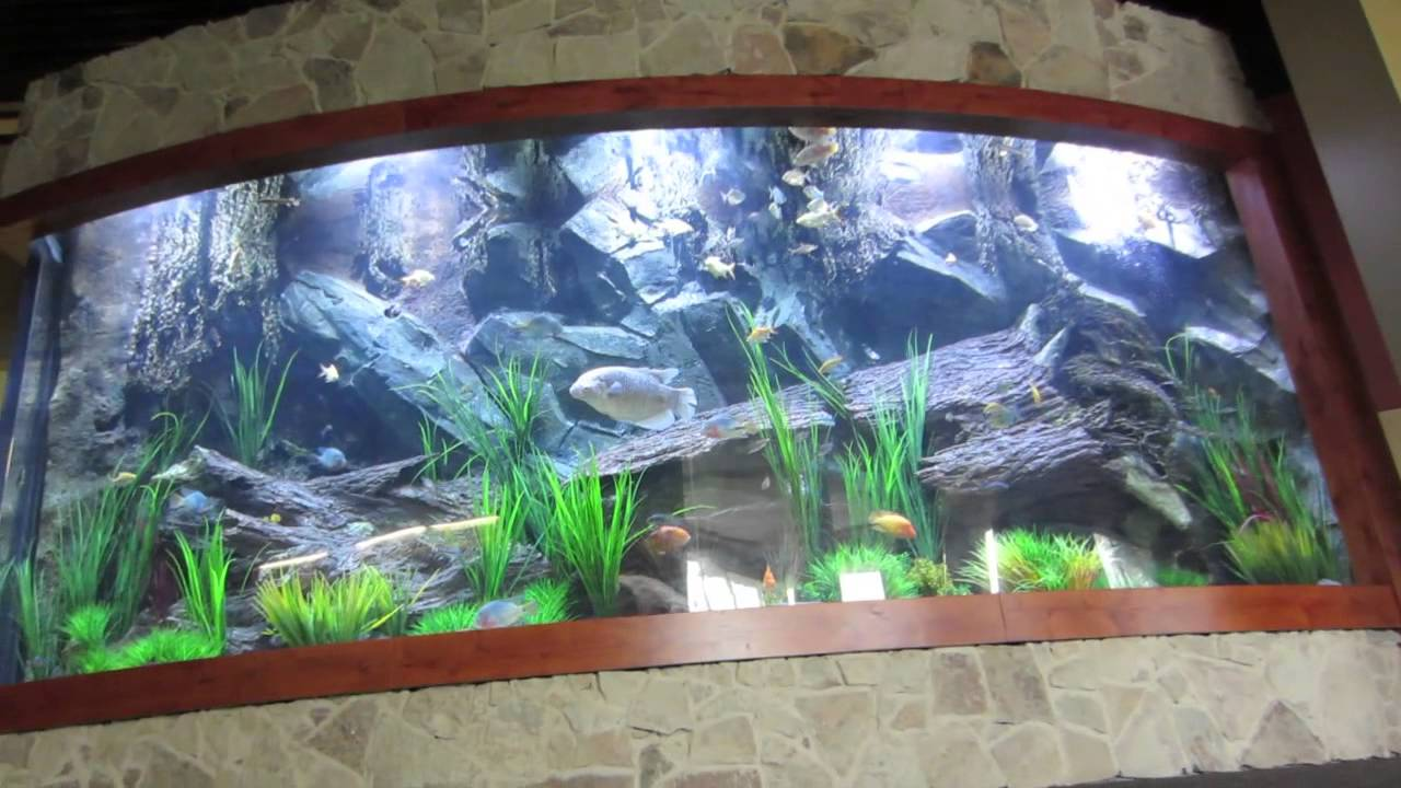 Fish gallery massive acrylic aquarium 5000 gallons for Acrylic vs glass fish tank
