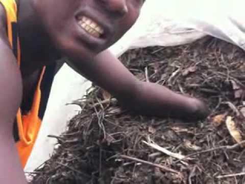 How to make rich organic compost in Sierra Leone, Africa