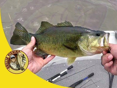 Spinnerbait Bass In The Grass - Crap Day Bass Fishing At Canal Lake Ontario (No Clickbait LOL)