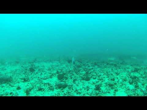 GoPro Fishing underater footage 90-feet YT ledge