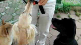 夏のおやつは大好きなキュウリ 新鮮キュウリを、かい(北海道犬)・ガク...