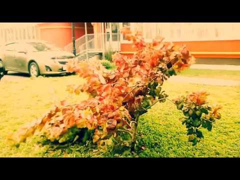 где снимали клип осень ддт