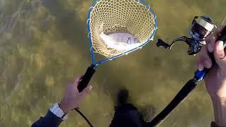石垣島 シャローフラットの釣り