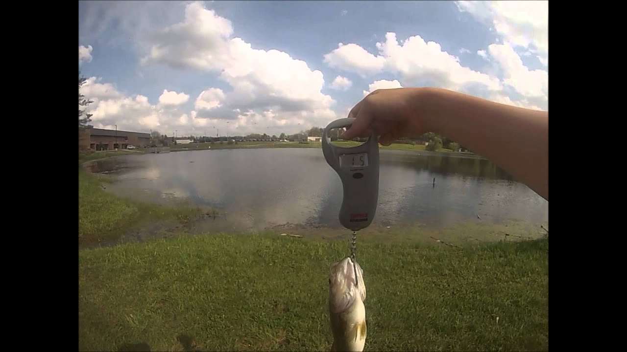 bass fishing ponds with culprit plastic worms - youtube, Soft Baits