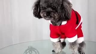 2018 Christmas Sweater Pet Clothes Festival Dog Clothes