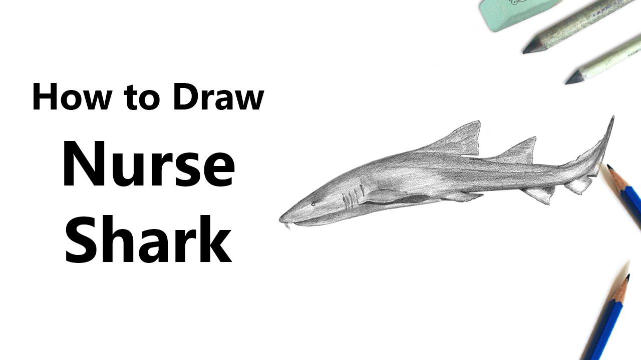 how to draw a nurse shark