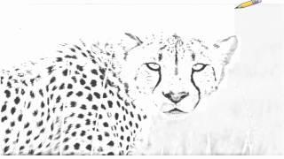 Auto Draw 2: Cheetah, Okonjuma Game Ranch, Namibia, Africa