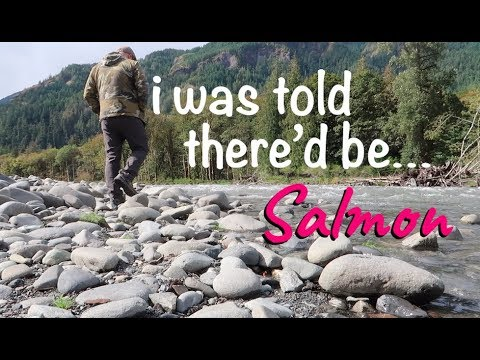 Where Are The Salmon? Elwha River And Madison Falls.