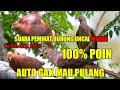 Suara Pikat Burung Uncal Atau Merpati Merah Terbaru  Di Jamin Poin  Mp3 - Mp4 Download