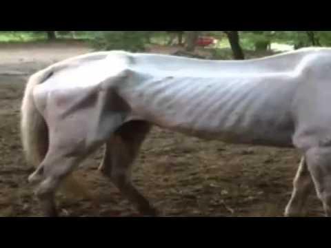 Emaciated horses, rotting carcass horrify neighbors