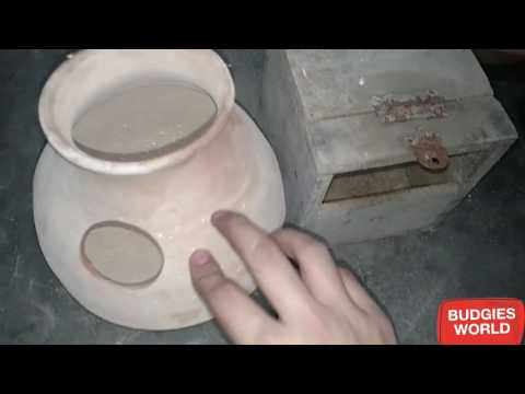 NEST BOXES FOR BUDGIES   FISHERS   DOVES   PIGEONS   FINCHES IN URDU