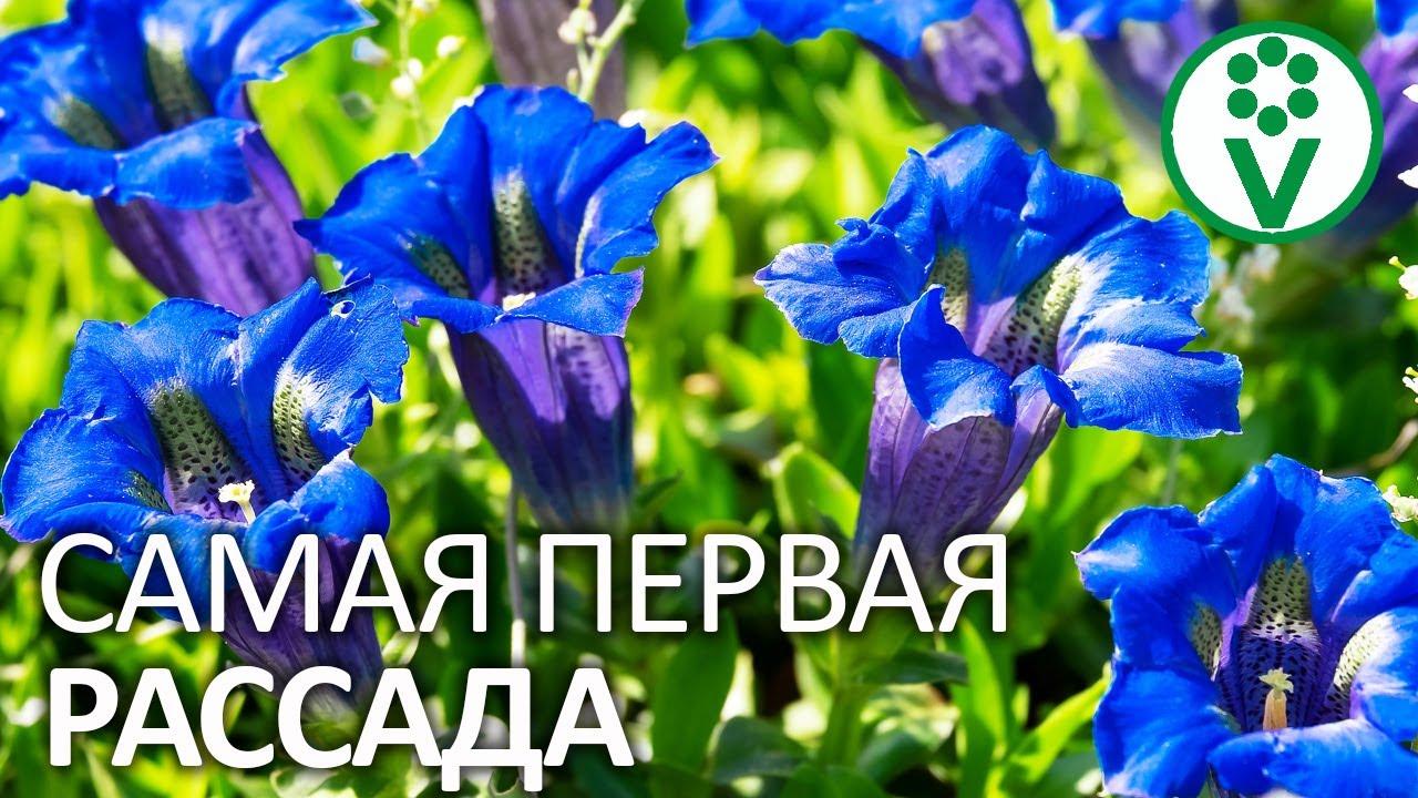 ПОСАДИТЕ ЭТИ ЦВЕТЫ НА РАССАДУ ПОКА НЕ ПОЗДНО! Посев семян цветов