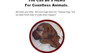The Orphan Dog Project: Supporting Rescuers And Funding Spay-neuter Initiatives