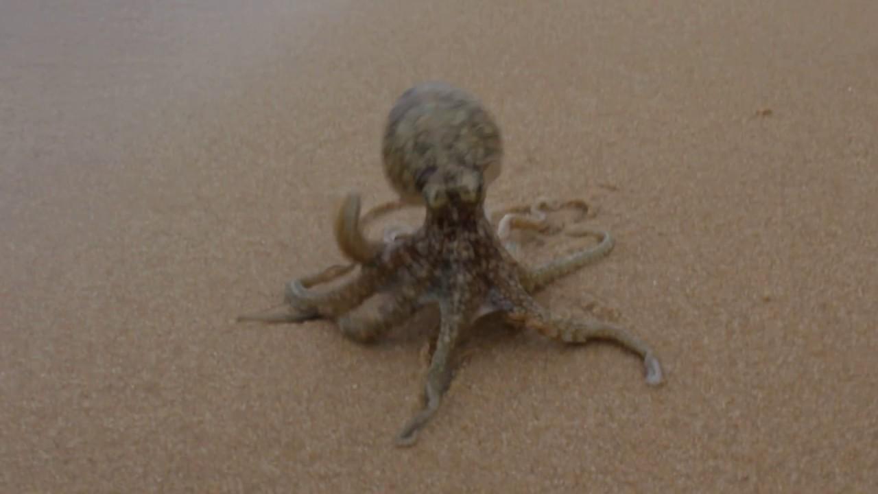 осьминог фото в воде