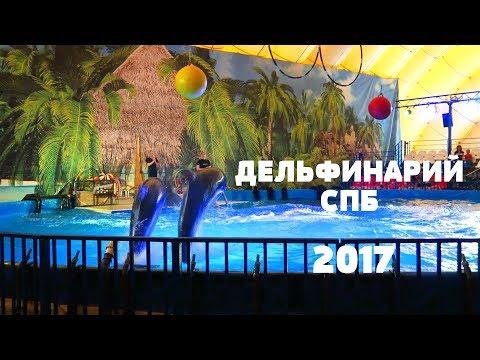 Дельфинарий Купчино Санкт-Петербург 2017