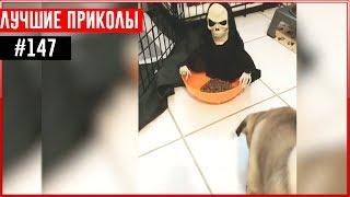 ПРИКОЛЫ 2017 Ноябрь #147 ржака до слез угар прикол - ПРИКОЛЮХА