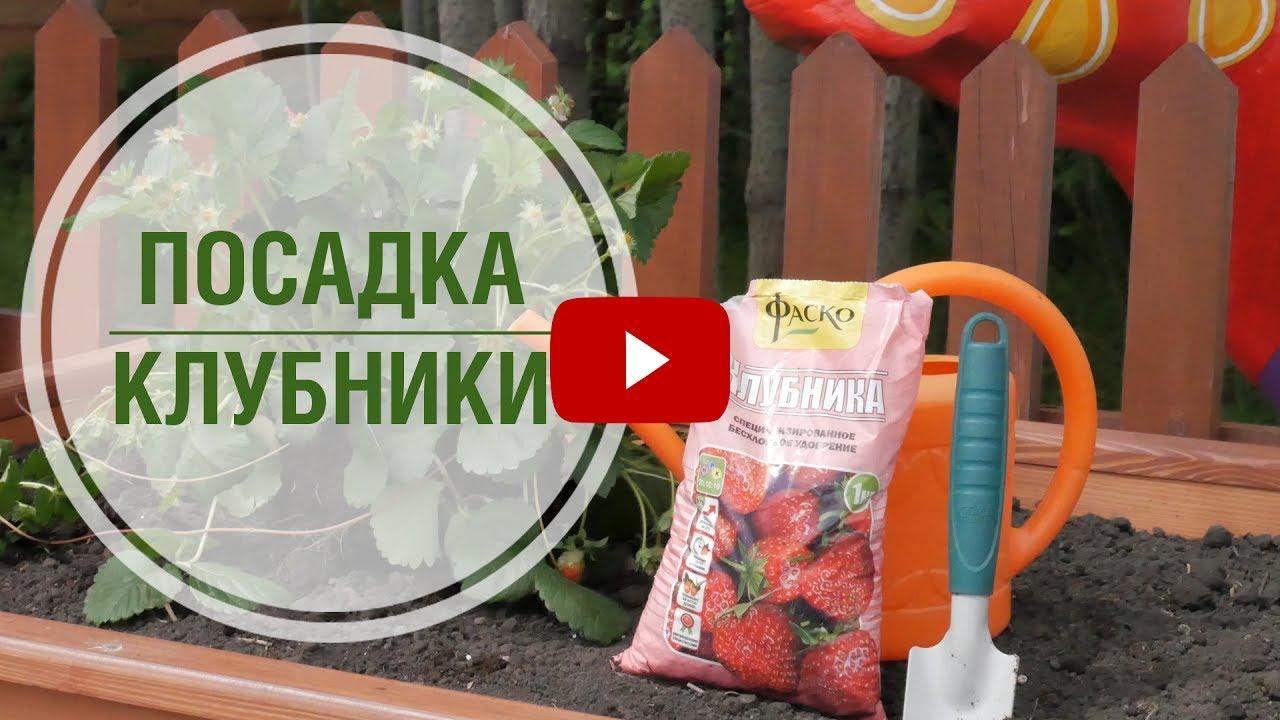 Посадка клубники в высокие грядки 🍓 Мастер-класс hitsadTV - YouTube