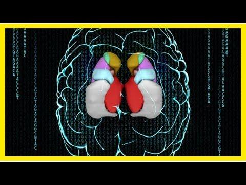 Eight genes that make us brainiacs
