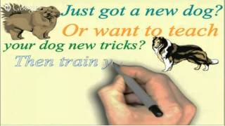 Online Dog or Puppy Training for Your Great Dane