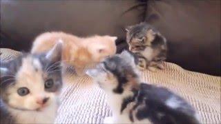 Funny kitten invasion