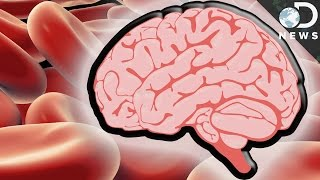 How The Blood-Brain Barrier Protects You From Death #AskDNews