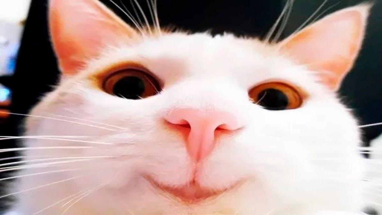Я Ржал Пол Часа/Смешные Животные, Коты Собаки и Другие Приколы | Животные Смешное Прикольные Видео